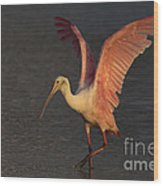 Roseate Spoonbill Photograph Wood Print