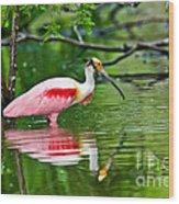 Roseate Spoonbill Wading Wood Print