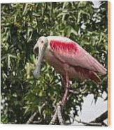 Roseate Spoonbill  What Are You Looking At 2 Wood Print