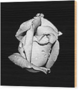 Rosebud In Black And White Wood Print