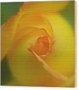 Yellow Rosebud Wood Print