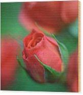 Rosebud  Wood Print by Kathy Yates
