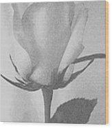 Rosebud Sketch No 1 Wood Print