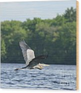 Roseland Lake Great Blue Heron Fly By  Wood Print