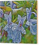 Rosemary In Fort Mojave-arizona Wood Print