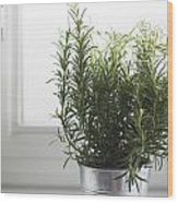 Rosemary In Metal Pot Wood Print