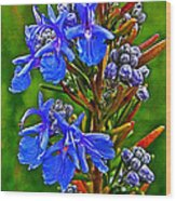Rosemary In Park Sierra Near Coarsegold-california  Wood Print
