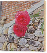 Roses Against The Wall Wood Print