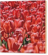 Tulips At The Plaza Hotel Wood Print