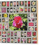 Roses Collage 2 - Painted Wood Print by Stefano Senise