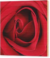 Roses For Life  Wood Print