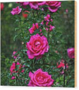 Roses In The Garden Wood Print