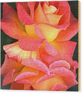 Roses Of Many Colors Wood Print