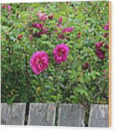 Roses On A Fence Wood Print