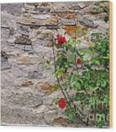 Roses On A Stone Wall Wood Print
