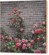 Roses On Brick Wall Wood Print by Elena Elisseeva