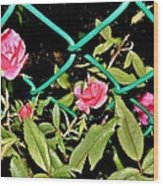 Roses On Fence Wood Print
