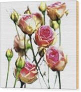 Roses (rosa 'mini Eden') Wood Print