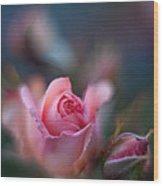 Roses Scented Dream Wood Print by Mike Reid
