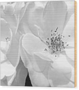 Roses Soft Petals In Black And White Wood Print