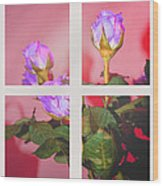 Roses Through The Window Wood Print