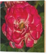 Rosey Rose Wood Print
