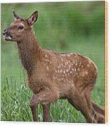 Rosie Elk Youngin Wood Print