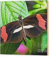 Rosina Butterfly Wood Print