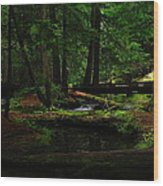 Ross Creek Montana Wood Print