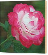 Rosy Reds And Whites Wood Print