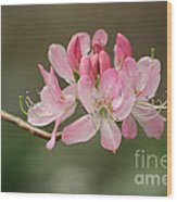 Rosy Rhododendron Wood Print