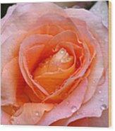Rosy Rose Wood Print