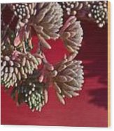 Rosy Sedum 5 Wood Print