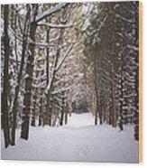 Roth Park Trail 2 Wood Print