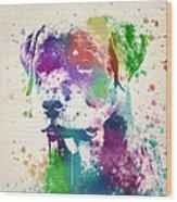 Rottweiler Splash Wood Print by Aged Pixel