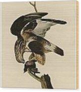 Rough-legged Falcon Wood Print