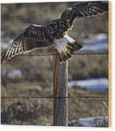 Rough-legged Hawk   #1865 Wood Print