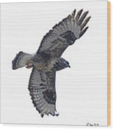 Rough-legged Hawk In Flight-signed-#4318 Wood Print
