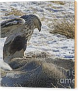 Rough-legged Hawk On A Mule Deer Kill Wood Print