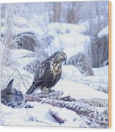 Rough Legged Hawk On Deer Carcass Wood Print