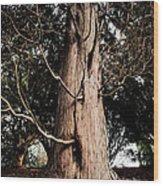 Roukenglentree Wood Print