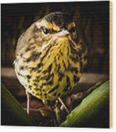 Round Warbler Wood Print
