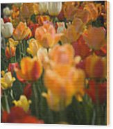 Row Of Colorful Tulips Wood Print