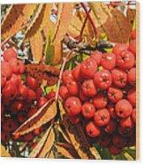 Rowan Berry Wood Print