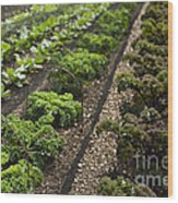 Rows Of Kale Wood Print