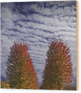Rows Of Red Autumn Trees With Cirus Clouds Wood Print