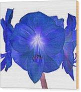 Royal Blue Amaryllis On White Wood Print
