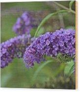 Royal Butterfly Bush Wood Print