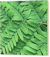 Royal Fern  Frond Detail Wood Print