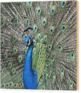 Royal Peacock Display Wood Print